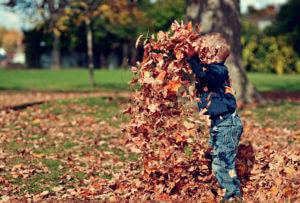 Fall Leaves in Fairhope
