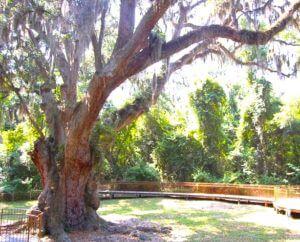 daphne alabama jacksons oak